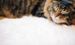 良質な睡眠でアンチエイジング対策♪ ~快適に眠るための環境づくりとは? ~